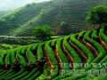 农民茶市触网行动展开 茶叶电商痛点解析