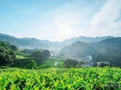 """广东茶文化大有讲究 这份""""巡茶""""攻略一定要收藏!"""